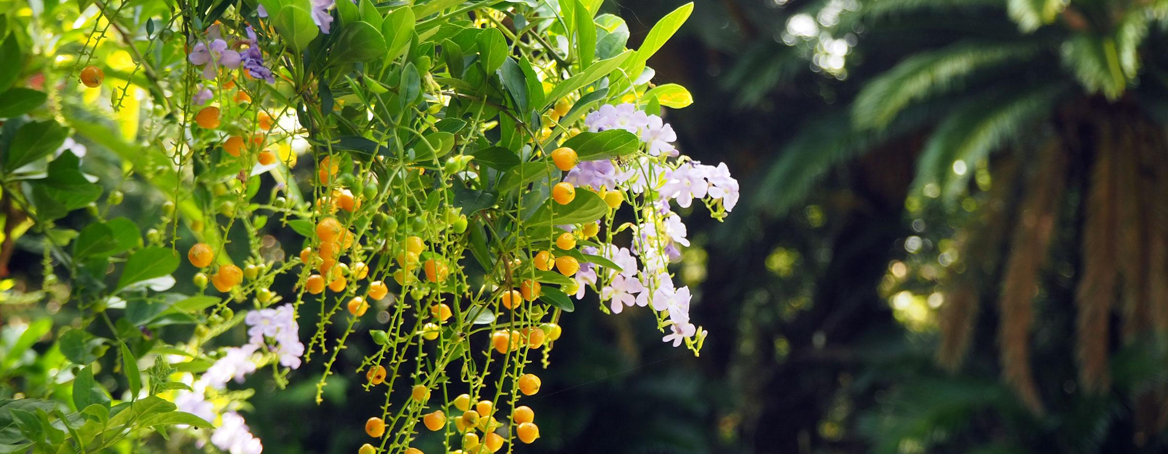 奄美大島の長期滞在可能なペンション【あーりーばーど】 |  亜熱帯植物 亜熱帯